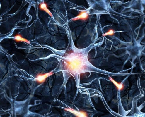 how cbd and thc effect the Endocannabinoid System